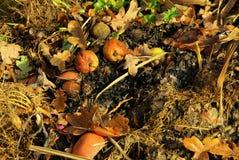 Kompostowy stos Fotografia Royalty Free