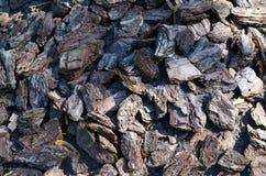 Komposttäckningskäll runt om en trädbakgrund för fuktighetskvarhållande Arkivbilder