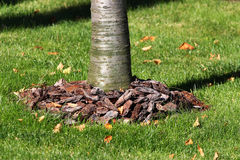 Komposttäckningskäll runt om ett träd Fotografering för Bildbyråer