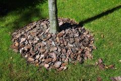 Komposttäckningskäll runt om ett träd Arkivfoto