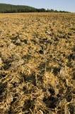 komposttäckningstubble royaltyfria foton