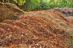Komposttäckning i trädgård Arkivbilder