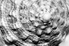 komputerowego sztuki pokolenia wyższa rozdzielczość skorupy spirala bardzo Fotografia Royalty Free