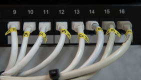 Komputerowi ethernetów dane lan kable z rzędu Obraz Royalty Free