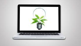 Komputerowy laptopu i rośliny dorośnięcie wśrodku żarówki odizolowywa Zdjęcie Stock
