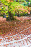 Komyozenjitempel in de herfstseizoen, selectieve nadruk Stock Foto