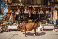 Kon i fron av souvenir shoppar i Rishikesh, Indien Fotografering för Bildbyråer