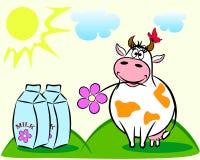 kon mjölkar Arkivfoto