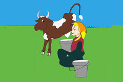 Kon mjölkar, byflickan Royaltyfria Foton