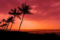 Kona日落棕榈树大岛夏威夷 免版税库存图片