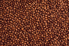 Kona Coffee Bean Background. Background of Premium Peaberry Kona Coffee Beans Royalty Free Stock Images