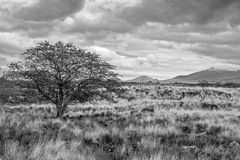 The Kona Side of the Big Island. The western side of the Big Island is referred to as the Kona Side.  This is a black and white image of the sparse vegetation Stock Images