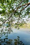 Konar drzewo i refrakcja wzór obraz stock
