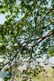 Konar drzewo wzoru tło fotografia royalty free