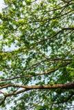 Konar drzewo wzoru tło obraz royalty free