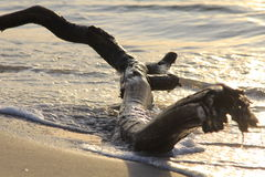 Konar na piasku Zdjęcie Royalty Free