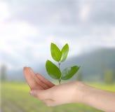 koncepcja ekologii obrazów więcej mojego portfolio obraz stock