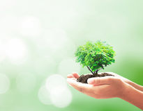 koncepcja ekologii obrazów więcej mojego portfolio Obrazy Royalty Free