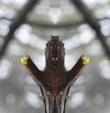Konceptualna fotografia twarz od gałąź z lali ` s ono przygląda się - twarz las - Zdjęcia Stock