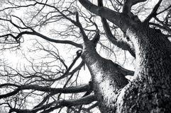 konceptualna wizerunku drzewa zima Zdjęcia Royalty Free