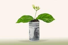 konceptualnego pieniężnego wzrostowego wizerunku odosobniony biel Obrazy Stock