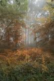 Konceptualny krajobrazowy wizerunek sezonowe zmiany w lesie Zdjęcie Stock