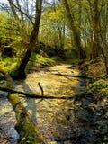 konceptualny lasowy wizerunek Fotografia Royalty Free