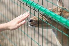 Konceptualny wizerunek kontakt między ludźmi i zwierzętami zbliżenie fotografia royalty free