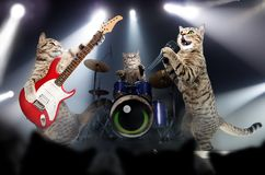 Koncert kotów muzycy fotografia stock