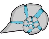 Koncha ślimaczki Obrazy Stock