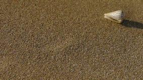 Koncha na piaskowatej plaży, wiatrowy ciosu piasek zbiory wideo