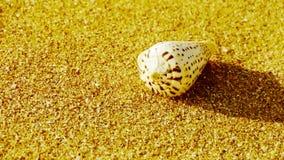 Koncha na złotej piaskowatej plaży, wiatrowy ciosu piasek zbiory wideo
