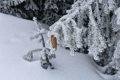 Koncha po środku śniegu Obraz Royalty Free