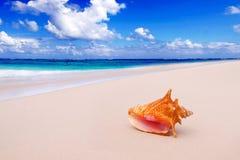 Koncha Shell na plaży. Zdjęcie Stock