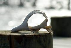 Koncha Shell w szmaragdowej wyspy północy Carolina zdjęcie stock
