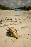 konchy łódkowata skorupa Zdjęcie Stock