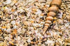Konchy na plaży Zdjęcie Royalty Free