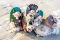 Konchy skorupa na piasek plaży morze lub ocean Fotografia Royalty Free