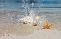 Konchy skorupa na piasek plaży z morzem Fotografia Royalty Free