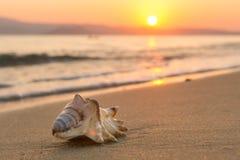 Konchy Skorupa na Plaży przy Zmierzchem fotografia stock