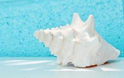 Konchy skorupa na stole z aqua Zdjęcie Royalty Free