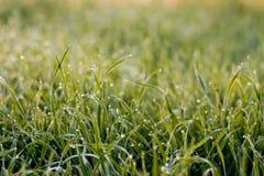 kondensationsdetaljgräs arkivfoton