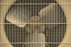 Kondensierende Einheit der Klimaanlage stockfotografie