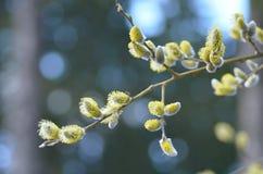 Kondig van de lente aan Stock Foto's