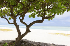 Kondoi beach, Taketomi Island, Japan Royalty Free Stock Photo