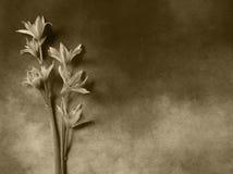 Kondolencje karta - szarość kwiaty Zdjęcia Royalty Free