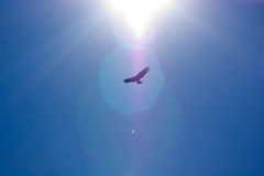 kondora słońce Obrazy Stock