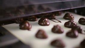 Konfektions- chokladsötsaker som är rörande på transportören, konfekttillverkning stock video