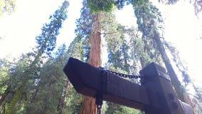 Kongresswegweiser am Nationalpark des Mammutbaums stock video
