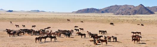 koni namib panorama dzika Obrazy Stock